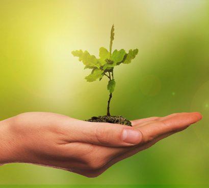 Geleceğe Nefes Olmanın Yolu: Fidan Bağışı